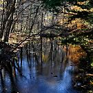 Beautiful River, Chester, CT by MJD Photography  Portraits and Abandoned Ruins