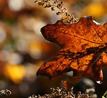 Maple Leaf Fall's Fall by Carole Brunet