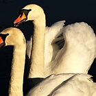 Swan Series 4. by Stan Owen