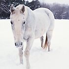 White Horse Snow by Skye Hohmann