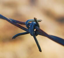 Along the wire by littleribbons