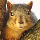 More Fox Squirrels by lorilee