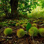 Chestnuts all over the path by João Almeida