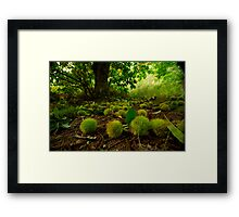 Chestnuts all over the path Framed Print