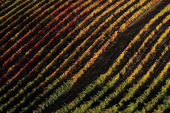 Diagonal vineyards in Douro Valley by João Almeida