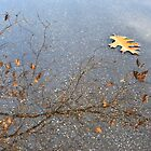 Oak Leaf in a Puddle by Kasia Nowak