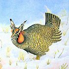 Greater Prairie Chicken by Marriet