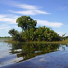 Typical island in the Okavongo delta  by jozi1