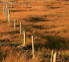 Fenceposts by Debbie  Roberts