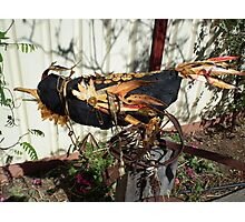 Disco Crow - returning to place of bith Photographic Print