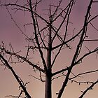 Tree on Maryland Ave, Central West End, St. Louis, Missouri by Crystal Clyburn