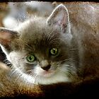 The Eyes of Innocence by bygeorge