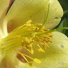 Pollen by Kim  Lambert