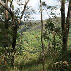 Bush Landscape by aussiebushstick