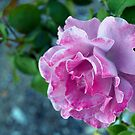 Mottled pink rose and bud by  B. Randi Bailey