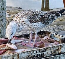Easy Fish Supper by lynn carter