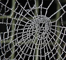 Frozen web by relayer51