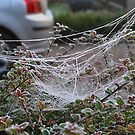 Confused Web by relayer51