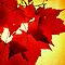 RED NOVEMBER by NatureGreeting Cards ©ccwri