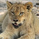 Otthawa lion cub(This is the life !) by jozi1