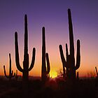 Saguaro Sunset by Lanis Rossi