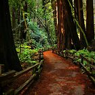 Walk Through Redwoods by Barbara  Brown