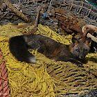 Resting Fox - Dutch Harbor by Melissa Seaback