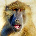 Guinea Baboon Portrait by HJIrvine