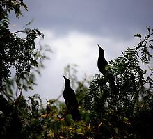 Grackles by Tam Ryan
