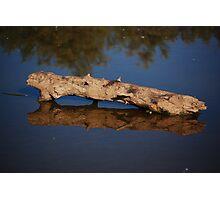 Log Reflection Photographic Print
