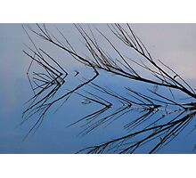 Branch Reflection Photographic Print