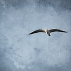 Lone seagull by Steph Ball