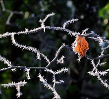 Final Leaf, Crook o' Lune by Richard Ion