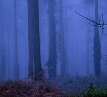 Misty Dawn by JSDyer