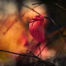 Red Leaf by Stas Medvedev