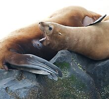 Sea Lion Baby by noffi