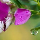 A Spring Shower by garts