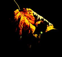 Withering leaf. by Livvy Young