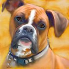 Boxer Dog by Iain McDonald