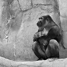 Contemplative Gorilla. by Usha Ganesh
