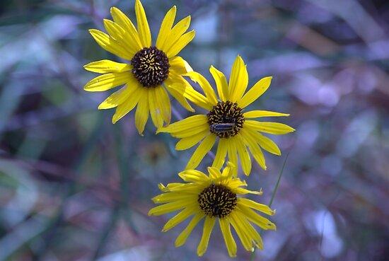 Wild Flowers by RBuey