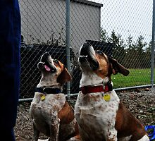 Bulldoggles by SamTheCowdog