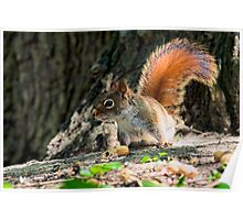 Bright Eyed And Bushy Tail Poster