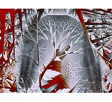 Trees I: Silvery Forest Photographic Print