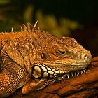 Green Iguana in deep thoughts by steppeland
