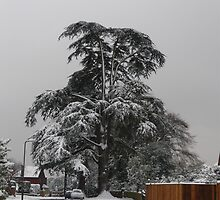Old Tree In Winter  by damonsphotos