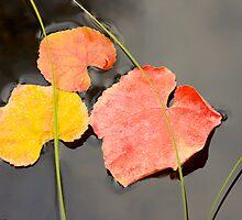 Floating Leaves by John Butler