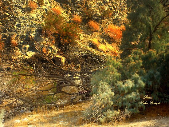 99 MILES FROM L.A...JULY IN THE CA. DESERT by Sherri     Nicholas