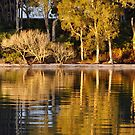 Reflections of White Patch - Bribie Island by Barbara Burkhardt