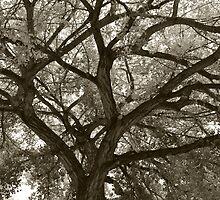 Abiquiu Fall Cottonwoods by klindsey